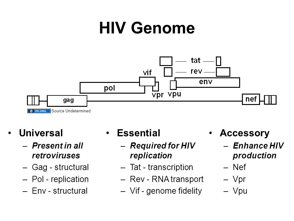 HIV Genome Essential –Required for HIV replication –Tat - transcription –Rev - RNA transport –Vif - genome fidelity Accessory –Enhance HIV production