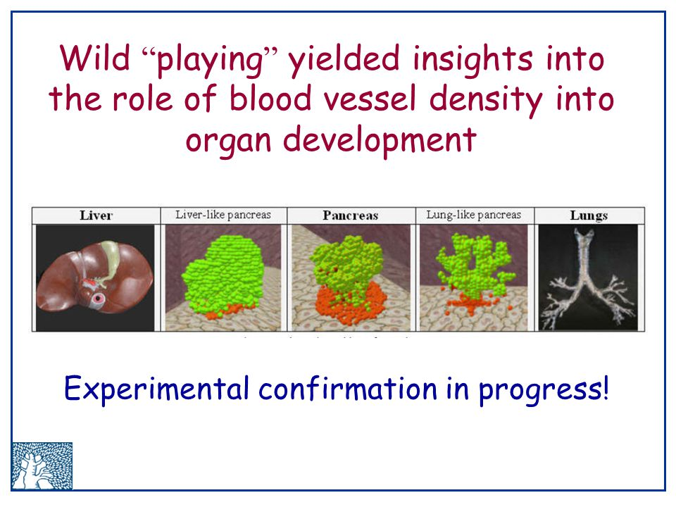 Wild playing yielded insights into the role of blood vessel density into organ development Experimental confirmation in progress!