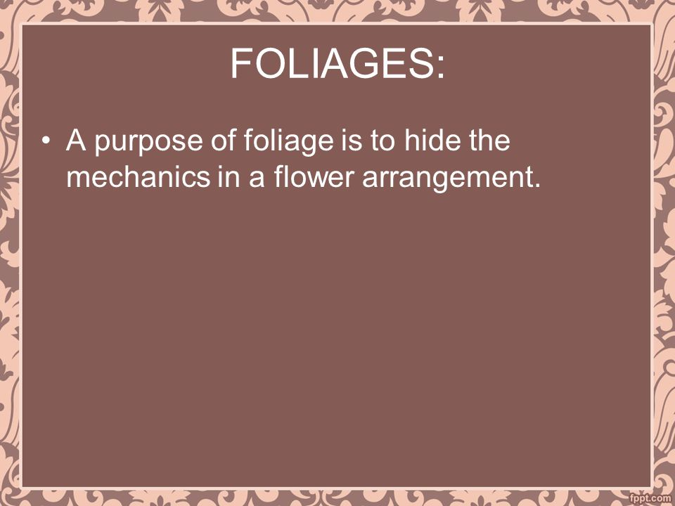 FOLIAGES: A purpose of foliage is to hide the mechanics in a flower arrangement.