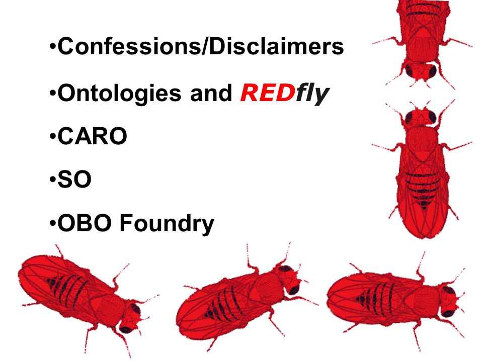 Confessions/Disclaimers Ontologies and REDfly CARO SO OBO Foundry