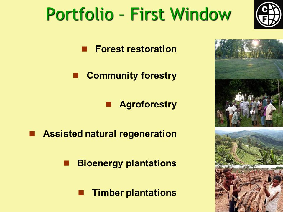 Portfolio – First Window Forest restoration Community forestry Agroforestry Assisted natural regeneration Bioenergy plantations Timber plantations
