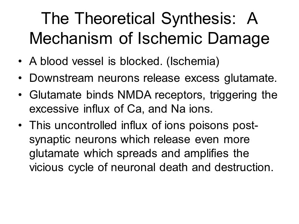 The Theoretical Synthesis: A Mechanism of Ischemic Damage A blood vessel is blocked. (Ischemia) Downstream neurons release excess glutamate. Glutamate