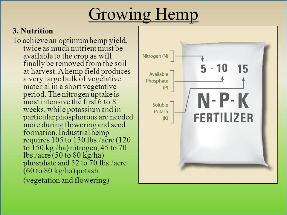 Growing Hemp 3.