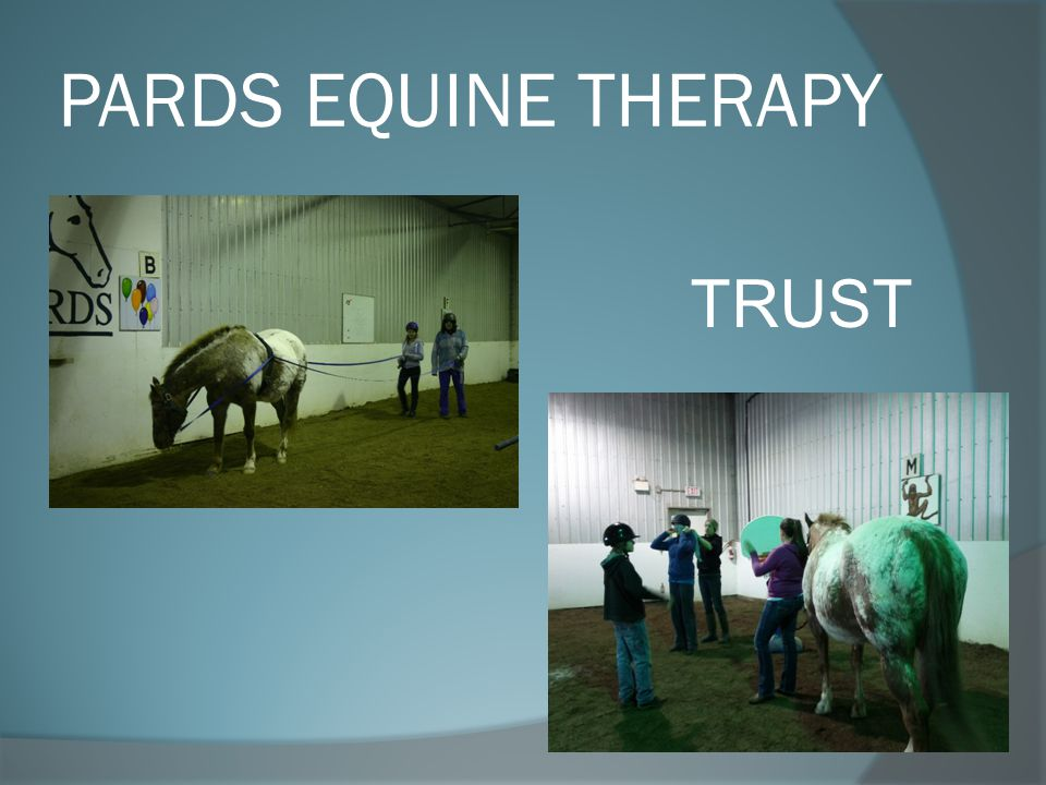 PARDS EQUINE THERAPY TRUST