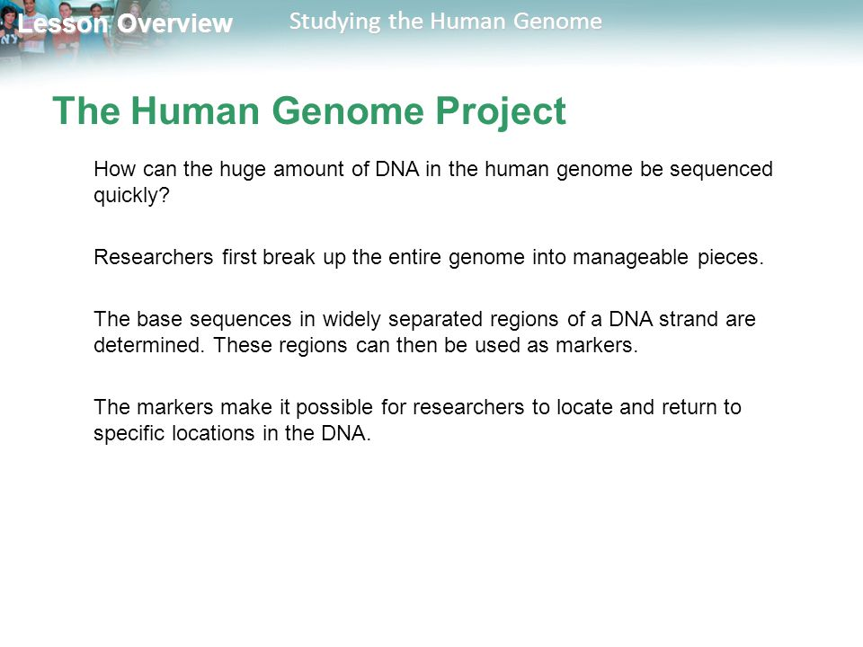 Lesson Overview Lesson Overview Studying the Human Genome The Human Genome Project How can the huge amount of DNA in the human genome be sequenced qui