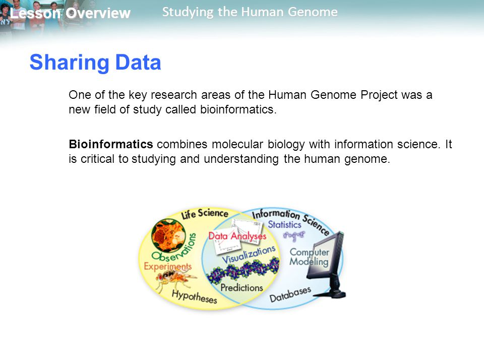 Lesson Overview Lesson Overview Studying the Human Genome Sharing Data One of the key research areas of the Human Genome Project was a new field of st