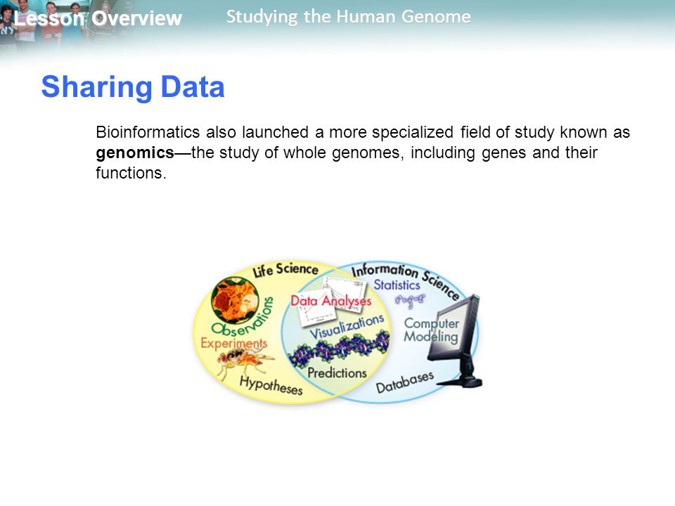 Lesson Overview Lesson Overview Studying the Human Genome Sharing Data Bioinformatics also launched a more specialized field of study known as genomic