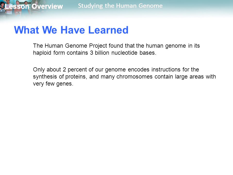 Lesson Overview Lesson Overview Studying the Human Genome What We Have Learned The Human Genome Project found that the human genome in its haploid for