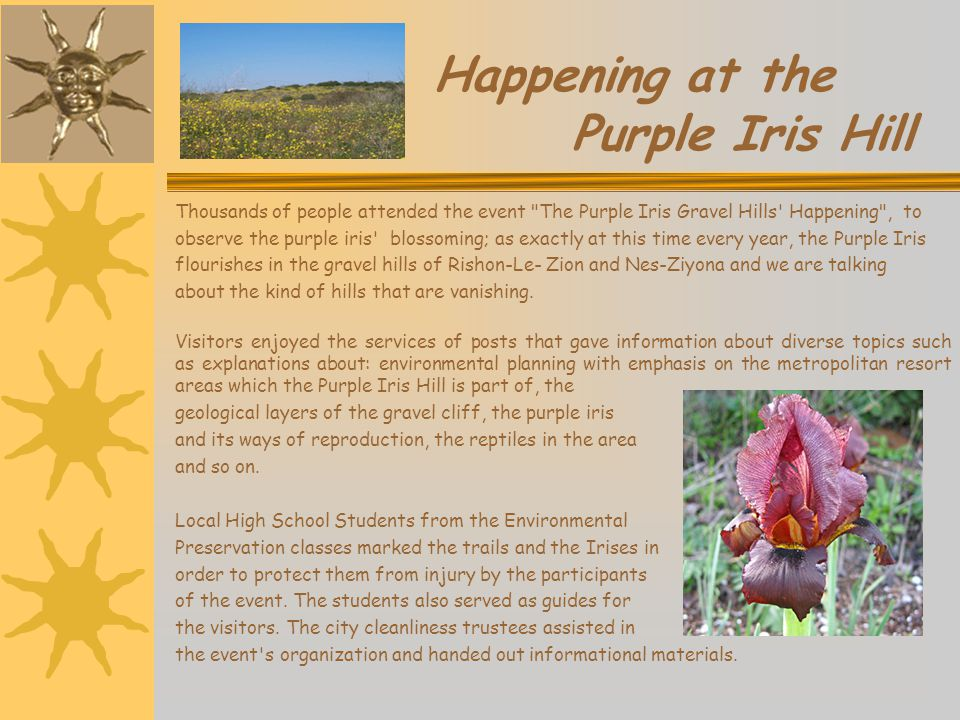 Happening at the Purple Iris Hill Thousands of people attended the event The Purple Iris Gravel Hills Happening , to observe the purple iris blossoming; as exactly at this time every year, the Purple Iris flourishes in the gravel hills of Rishon-Le- Zion and Nes-Ziyona and we are talking about the kind of hills that are vanishing.
