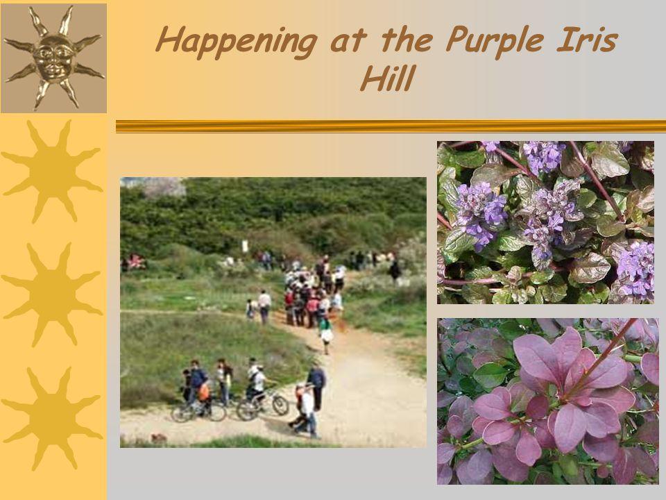 Happening at the Purple Iris Hill