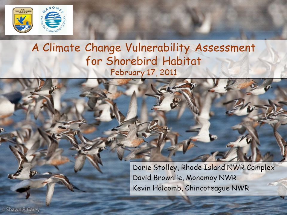 A Climate Change Vulnerability Assessment for Shorebird Habitat February 17, 2011 Dorie Stolley, Rhode Island NWR Complex David Brownlie, Monomoy NWR Kevin Holcomb, Chincoteague NWR