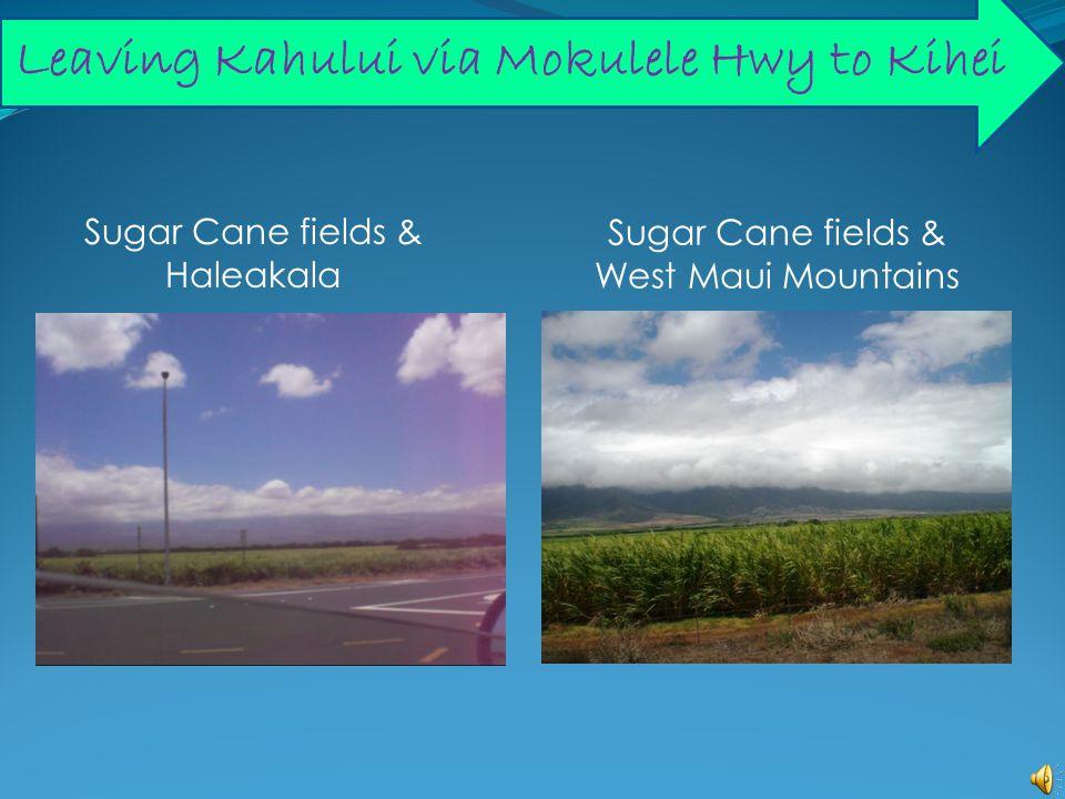 Leaving Kahului via Mokulele Hwy to Kihei Sugar Cane fields & West Maui Mountains Sugar Cane fields & Haleakala