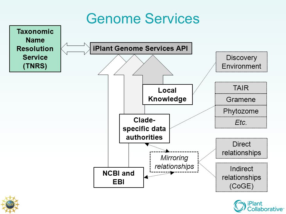 Genome Services iPlant Genome Services API Clade- specific data authorities NCBI and EBI Local Knowledge Mirroring relationships Direct relationships Indirect relationships (CoGE) Taxonomic Name Resolution Service (TNRS) Discovery Environment TAIR Gramene Phytozome Etc.