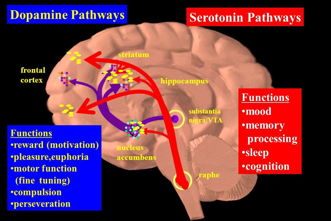 Dopamine Pathways Functions reward (motivation) pleasure,euphoria motor function (fine tuning) compulsion perseveration Serotonin Pathways Functions mood memory processing sleep cognition nucleus accumbens hippocampus striatum frontal cortex substantia nigra/VTA raphe