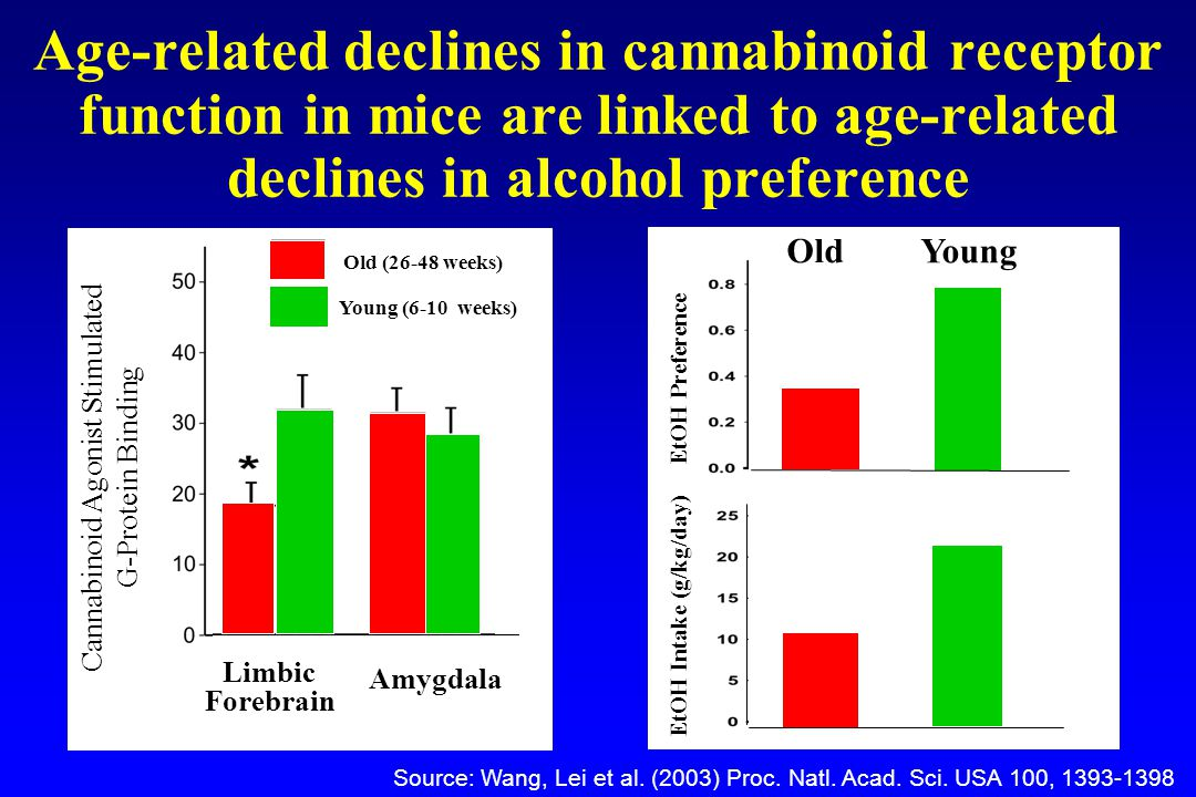 Age-related declines in cannabinoid receptor function in mice are linked to age-related declines in alcohol preference Source: Wang, Lei et al.