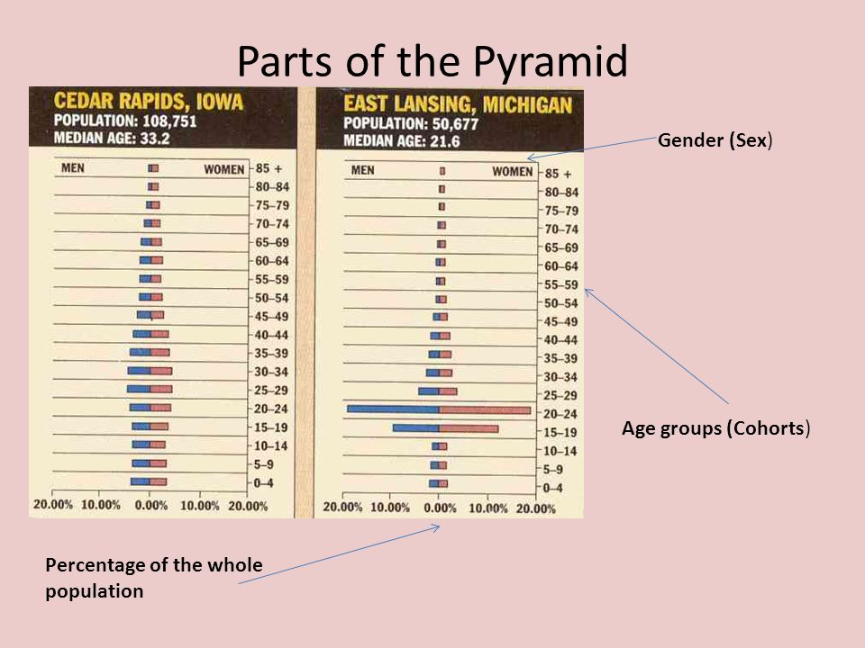 Parts of the Pyramid Age groups (Cohorts) Percentage of the whole population Gender (Sex)