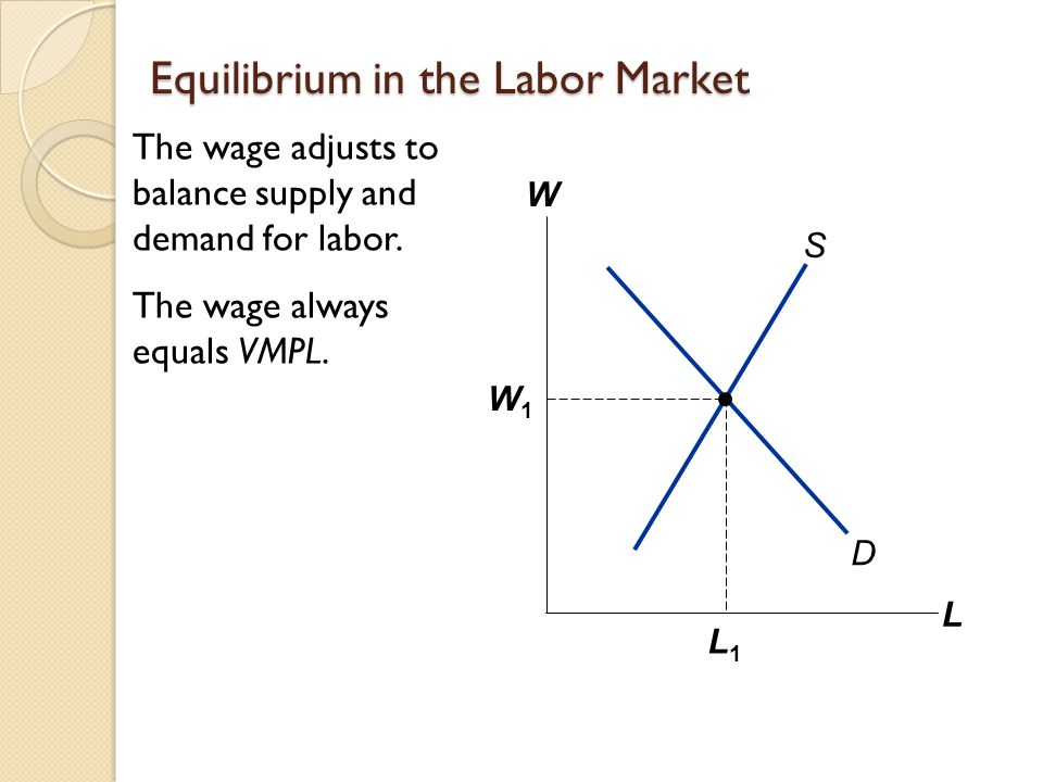 Equilibrium in the Labor Market The wage adjusts to balance supply and demand for labor.