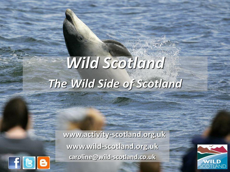 Wild Scotland The Wild Side of Scotland www.activity-scotland.org.uk www.activity-scotland.org.ukwww.wild-scotland.org.ukcaroline@wild-scotland.co.uk
