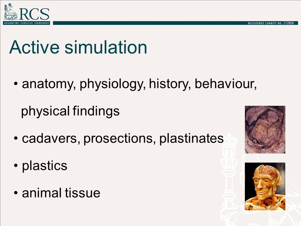 anatomy, physiology, history, behaviour, physical findings cadavers, prosections, plastinates plastics animal tissue Active simulation