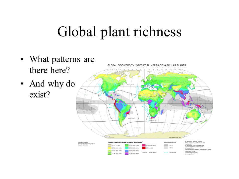 Global plant richness What patterns are there here And why do they exist