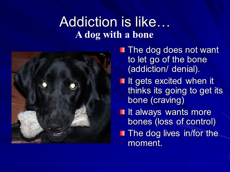 Addiction is like… The dog does not want to let go of the bone (addiction/ denial).