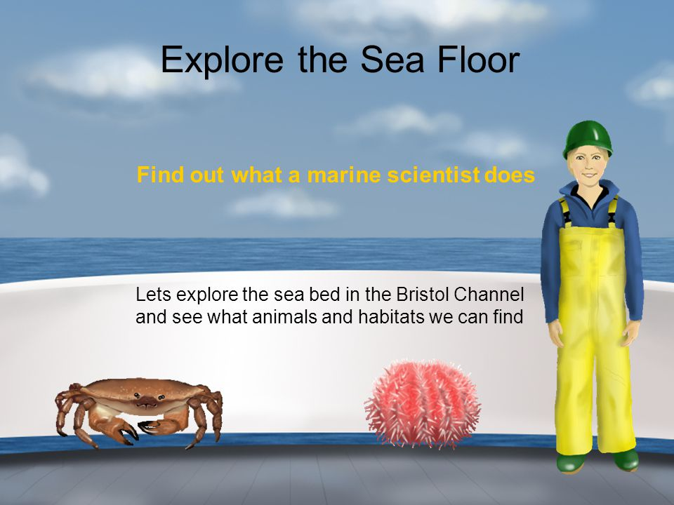 Explore the Sea Floor Find out what a marine scientist does Lets explore the sea bed in the Bristol Channel and see what animals and habitats we can f