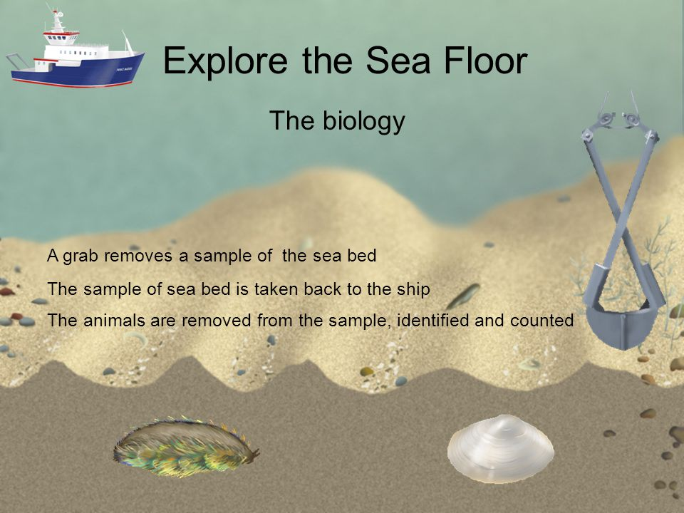 Explore the Sea Floor A grab removes a sample of the sea bed The biology The sample of sea bed is taken back to the ship The animals are removed from