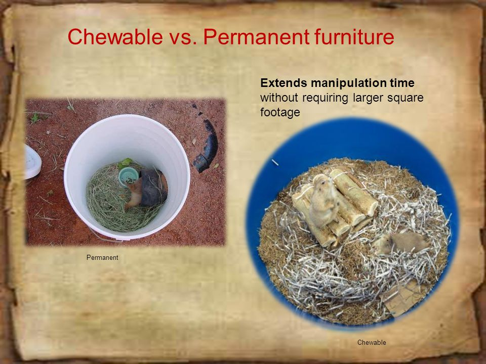 Edible vs. Permanent Furniture One of the most brilliant enrichments.