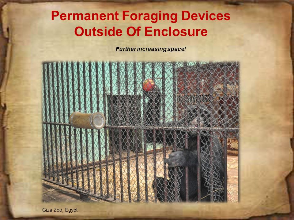 Permanent Foraging Devices Inside of Enclosure
