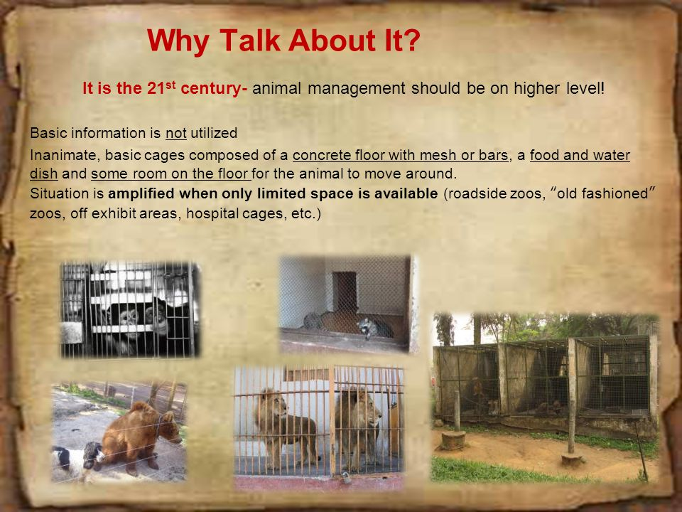The following slides illustrate some of our animals using enrichment in minimal space at the Phoenix Zoo