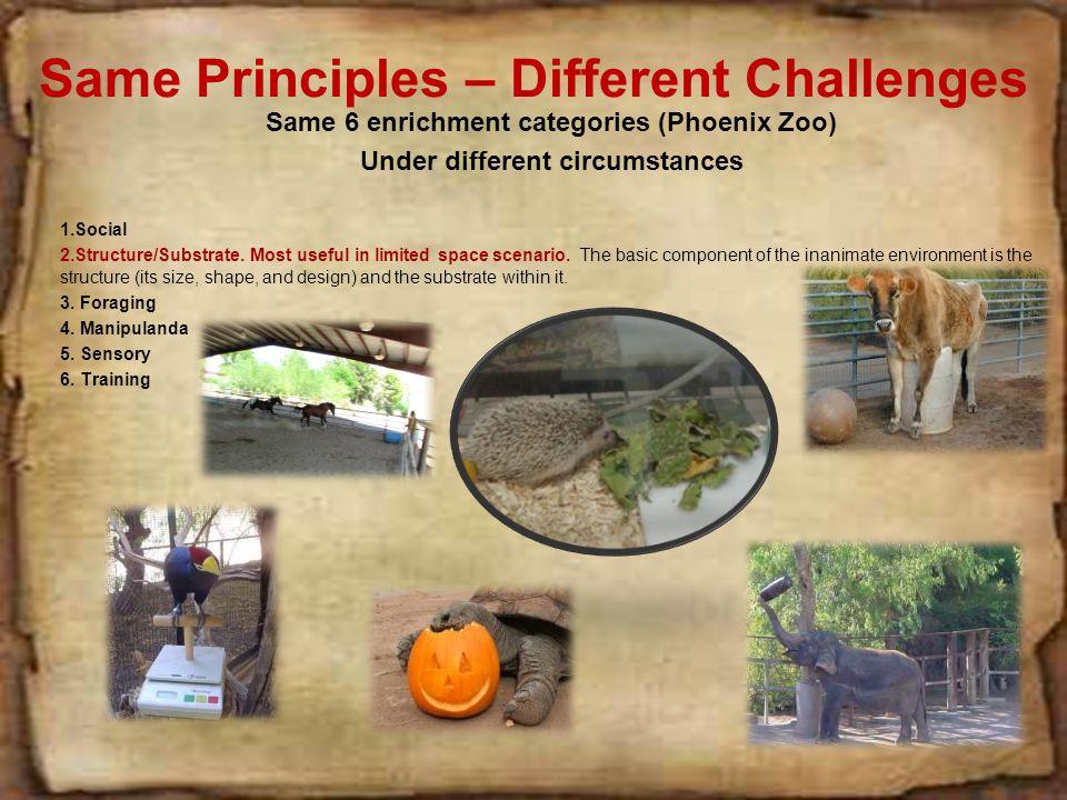 Same Principles – Different Challenges Same 6 enrichment categories (Phoenix Zoo) Under different circumstances 1.Social 2.Structure/Substrate.