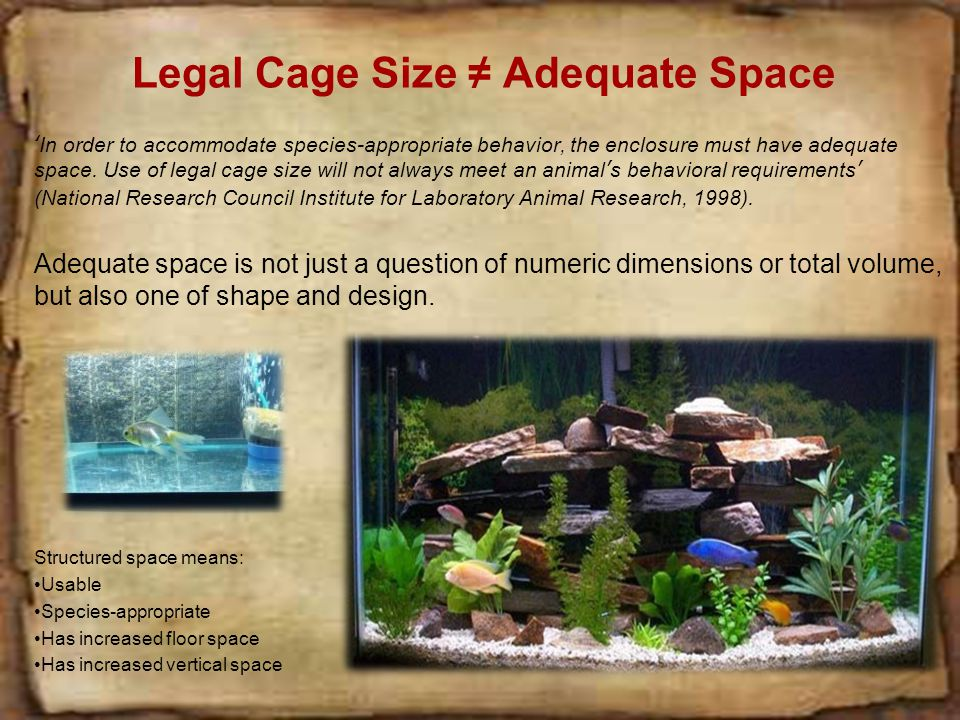 Legal Cage Size ≠ Adequate Space 'In order to accommodate species-appropriate behavior, the enclosure must have adequate space.