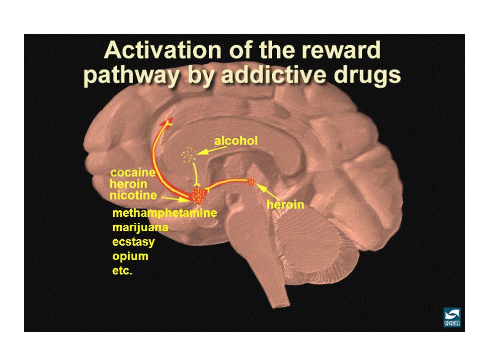 methamphetamine marijuana ecstasy opium etc.