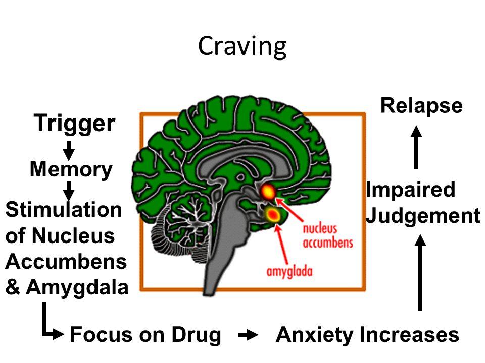 Craving Trigger Memory Stimulation of Nucleus Accumbens & Amygdala Focus on DrugAnxiety Increases Impaired Judgement Relapse