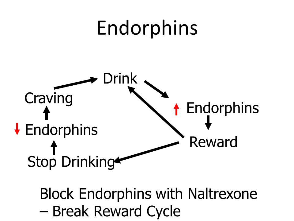 Endorphins Drink Endorphins Reward Stop Drinking Endorphins Craving Block Endorphins with Naltrexone – Break Reward Cycle
