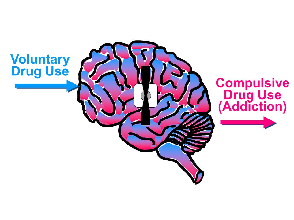 0 0 100 200 300 400 0 0 1 1 2 2 3 3 4 4 5 hr Time After Cocaine % of Basal Release DA DOPAC HVA Accumbens COCAINE 0 0 100 150 200 250 0 0 1 1 2 2 3 3 4 4 5hr Time After Morphine % of Basal Release Accumbens 0.5 1.0 2.5 10 Dose (mg/kg) MORPHINE Source: Di Chiara and Imperato Effects of Drugs on Dopamine Levels