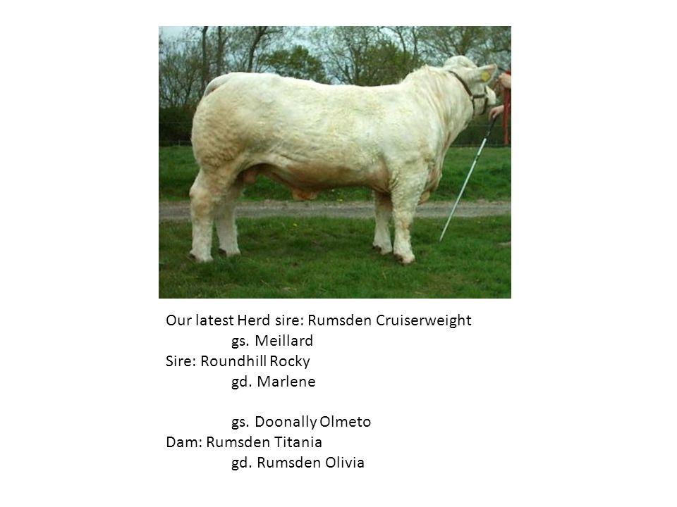 Our latest Herd sire: Rumsden Cruiserweight gs.Meillard Sire: Roundhill Rocky gd.