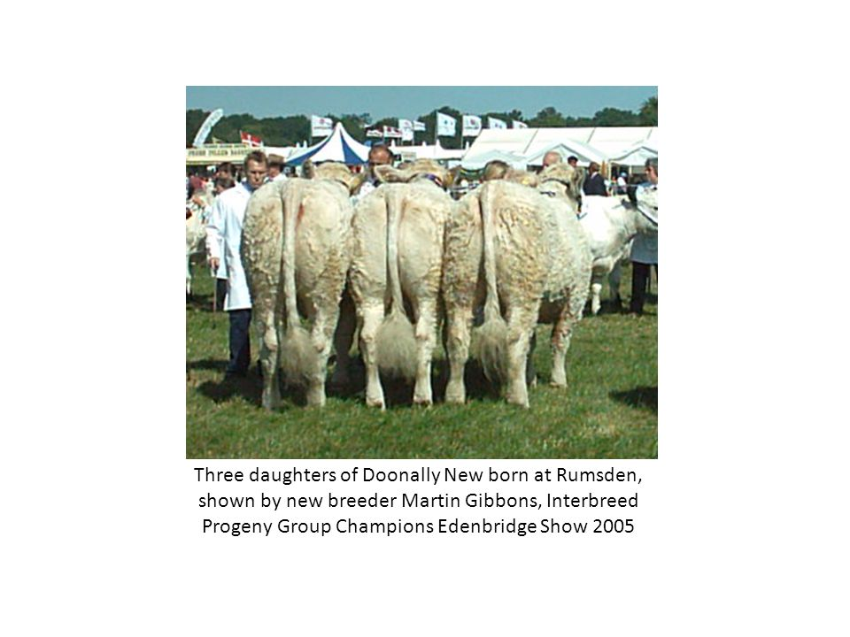 Three daughters of Doonally New born at Rumsden, shown by new breeder Martin Gibbons, Interbreed Progeny Group Champions Edenbridge Show 2005