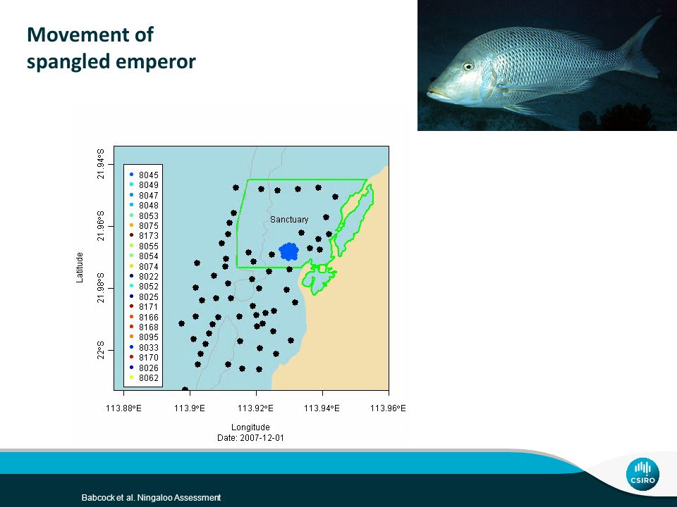 Movement of spangled emperor Babcock et al. Ningaloo Assessment