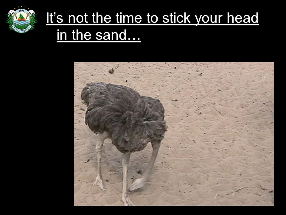 Slide 93 It's not the time to stick your head in the sand…