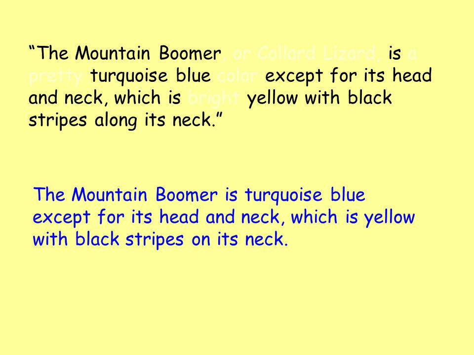 """The Mountain Boomer, or Collard Lizard, is a pretty turquoise blue color except for its head and neck, which is bright yellow with black stripes alon"