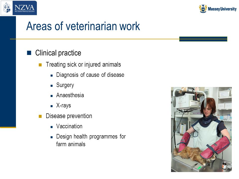 Areas of veterinarian work (cont) Clinical practice (cont) Different types of clinical practice Dogs and cats Horses Farm animals  cattle  sheep  deer  pigs  poultry  other, eg.