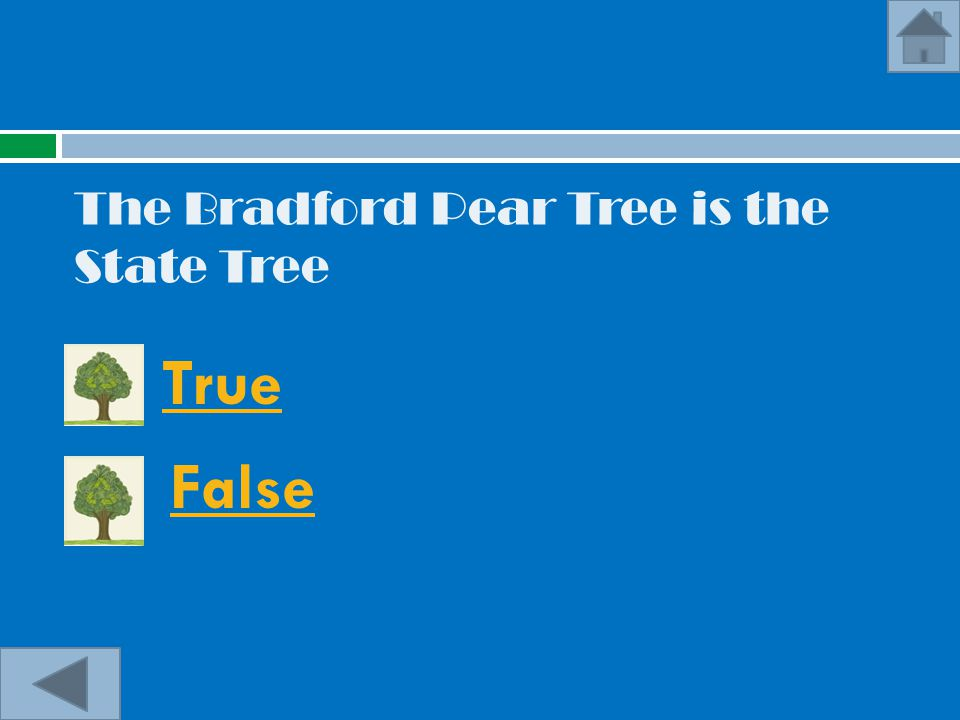 The Bradford Pear Tree is the State Tree True False