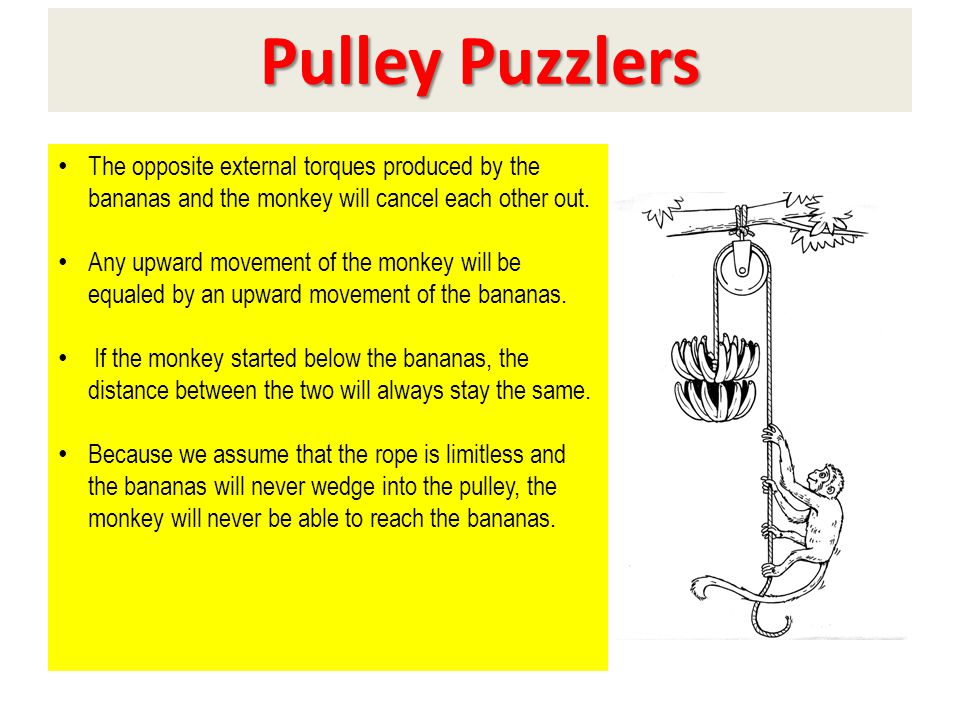 Evaluation Pulley Puzzlers The opposite external torques produced by the bananas and the monkey will cancel each other out. Any upward movement of the