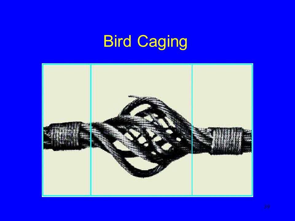 39 Bird Caging
