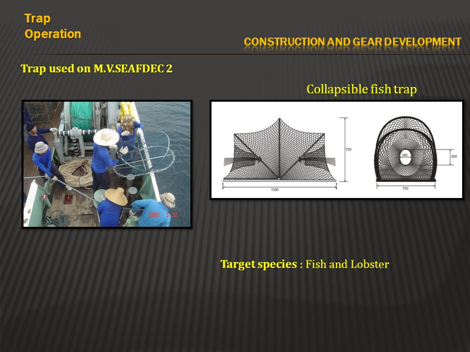 Trap used on M.V.SEAFDEC 2 Collapsible fish trap TrapOperation Target species Target species : Fish and Lobster