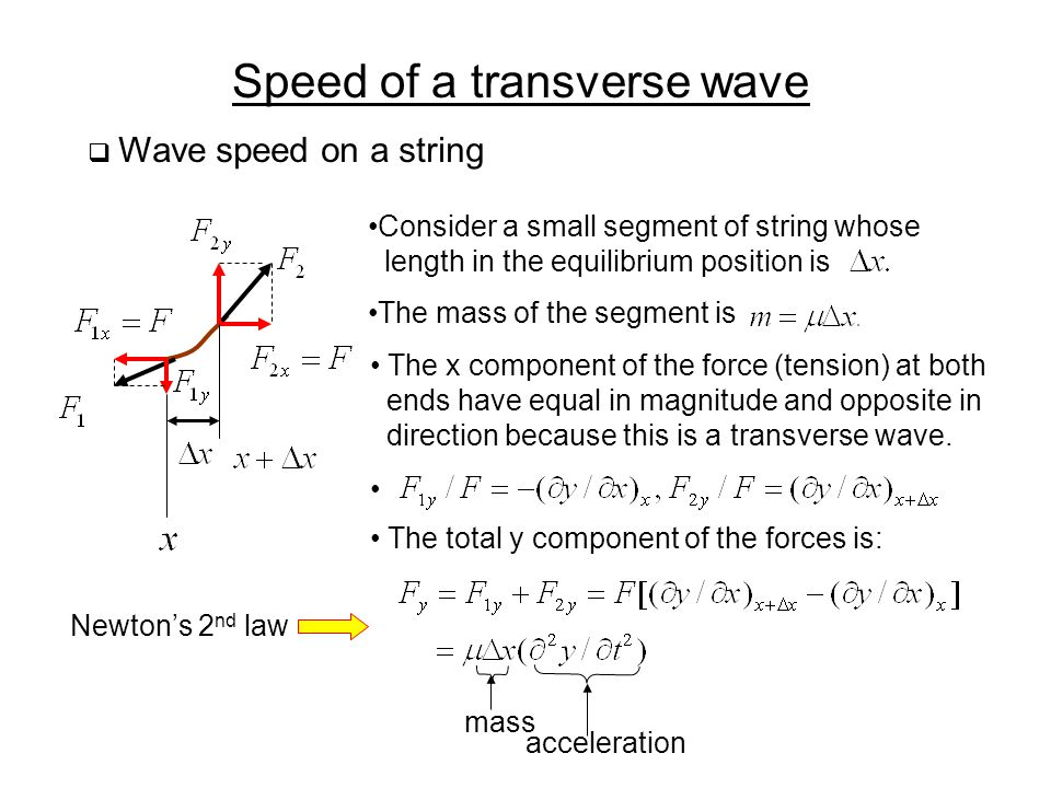 Speed of a transverse wave  Wave speed on a string Consider a small segment of string whose length in the equilibrium position is The mass of the segment is The x component of the force (tension) at both ends have equal in magnitude and opposite in direction because this is a transverse wave.