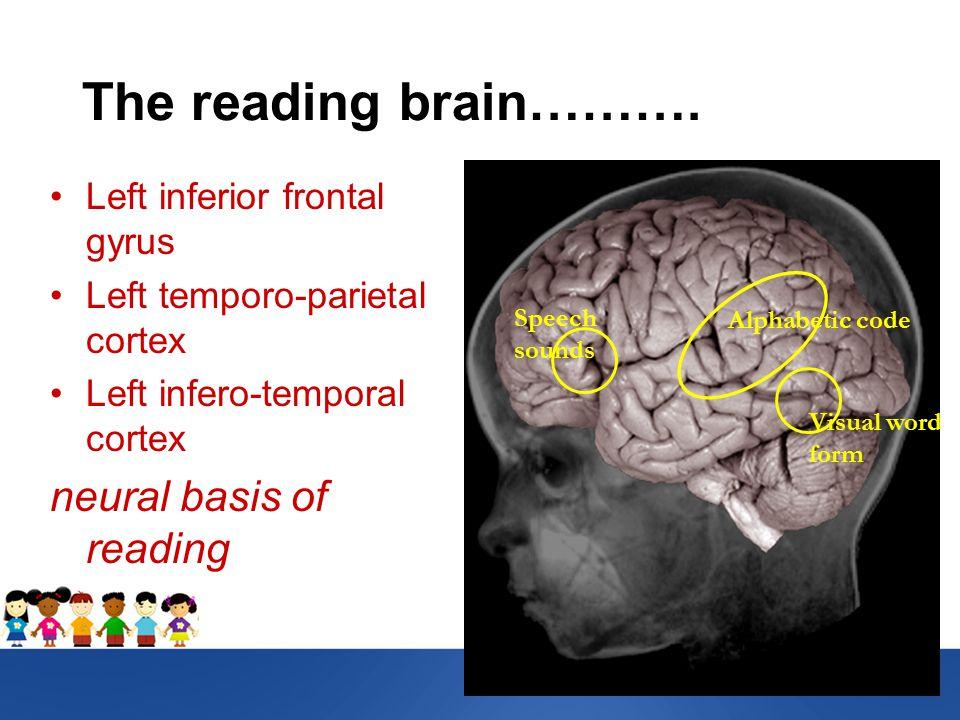The reading brain……….