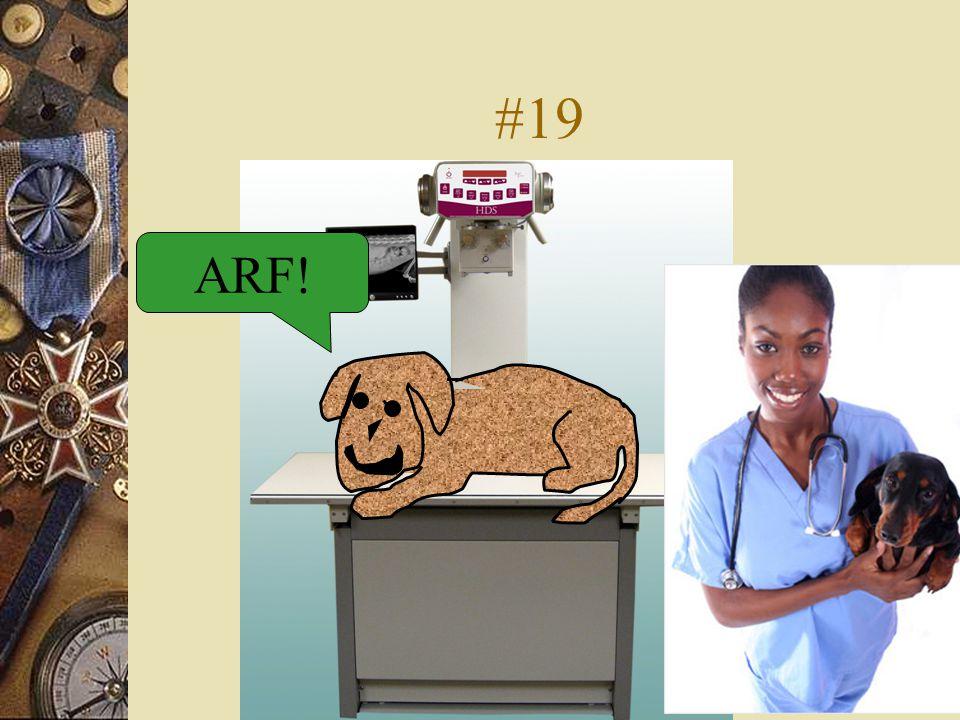 #19 ARF!