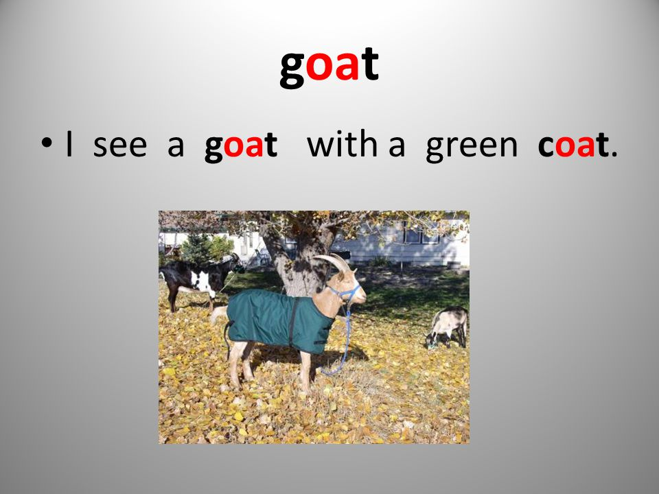 goat I see a goat with a green coat.